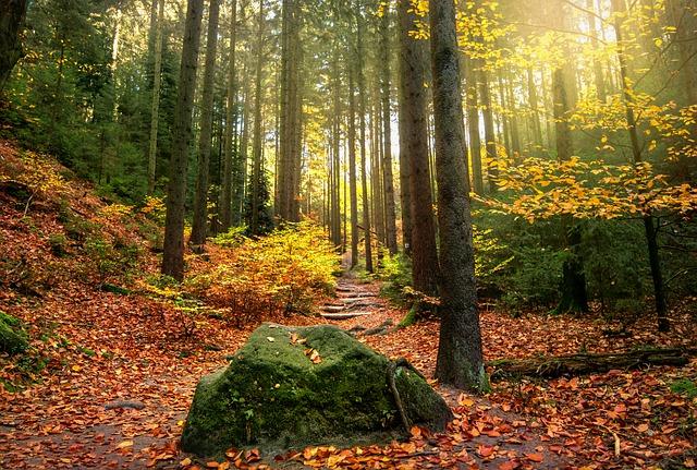 Francis Hallé, un botaniste engagé pour protéger la forêt