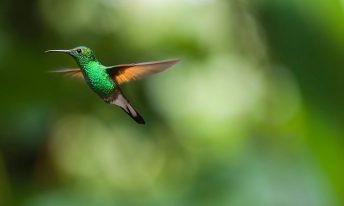 Nature et Stratégie en mode Colibri
