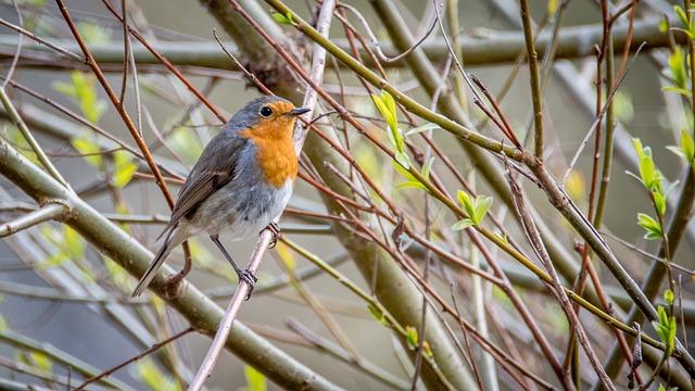 3 idées toutes simples pour soutenir la biodiversité