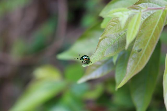 Le triple enjeu écologique des insecticides