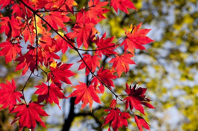 Les 4 fantastiques pour un ménage d'automne au top !