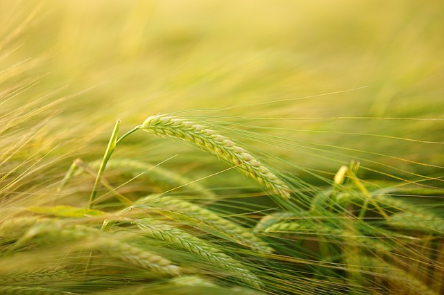 La bio pousse en France  : +10% de surface agricole en 2015!