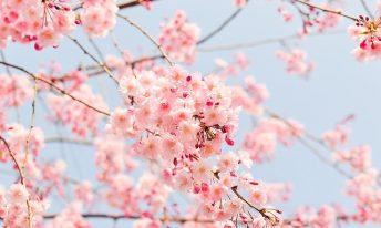 Ecologie, orgueil et préjugés au Japon