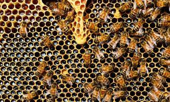 Salon Marjolaine : à la découverte des trésors de la ruche avec Catherine Ballot-Flurin