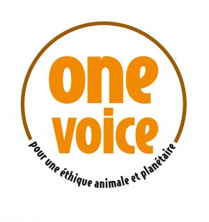 Logo One Voice orange