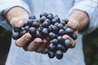 Cure de raisins avantages