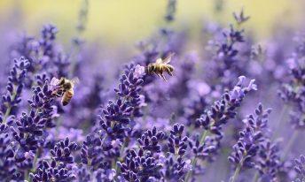 3 conseils pour limiter les risques d'allergies au pollen
