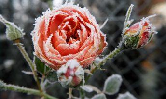 Jardinage : comment aider ses plantes à survivre à l'hiver ?