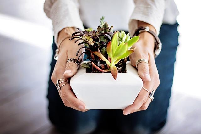 Protéger ses plantes d'intérieur en hiver