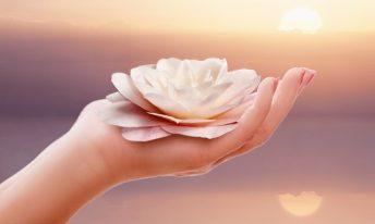 Main tenant une fleur