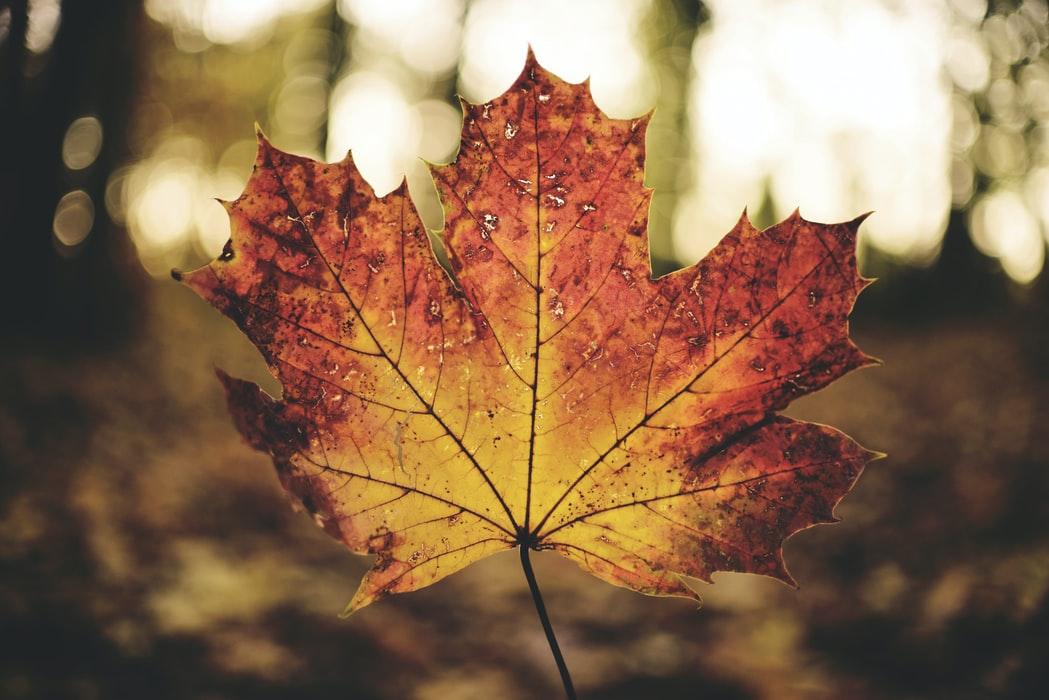 4 astuces bien être en automne